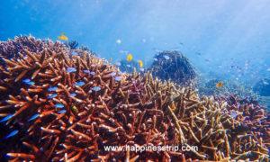 ทัวร์เกาะนาคินโย (Boulder Island) เกาะพม่า